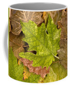 autumm is coming 3 - A carpet of autumn color leaves Coffee Mug