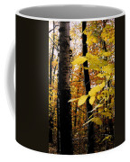 Autumn Birch Trees Coffee Mug