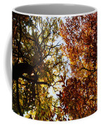 Autumn Chestnut Canopy   Coffee Mug