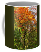 Autumn Color At Old Woman Creek 2 Coffee Mug