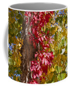 Autumn Leaves In Palo Duro Canyon 110213.97 Coffee Mug