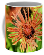Autumn's Gerber Daisy Coffee Mug