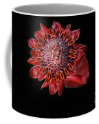 Awapuhi Ko Oko'o - Torch Ginger - Etlingera Elatior - Hawaii Coffee Mug