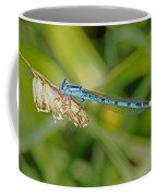 Azure Damselfly  Coffee Mug