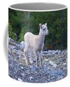 Baby Big Horn Sheep Coffee Mug