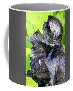 Baby Bluejay Peek Coffee Mug by Karen Wiles