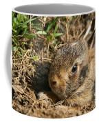 Baby Eastern Cottontail Coffee Mug