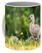 Baby Duckling In The Morning Light Coffee Mug