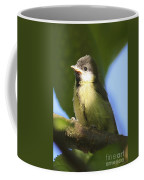 Baby Coal Tit Coffee Mug