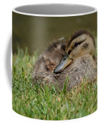 Baby Mallard Coffee Mug