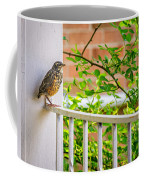 Baby Robin - Such A Big World Coffee Mug