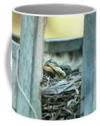 Baby Robins Coffee Mug