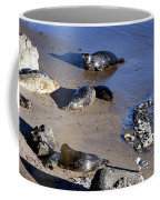 Baby Seals Coffee Mug