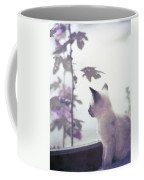Baby Siamese Kitten Coffee Mug