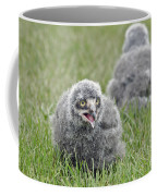 Baby Snowy Owls Coffee Mug