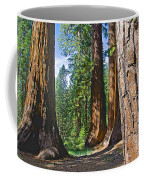 Bachelor And Three Graces In Mariposa Grove In Yosemite National Park-california Coffee Mug