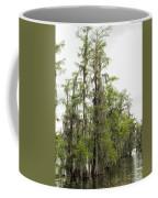 Bald Cypress - Axodium Distichum Coffee Mug
