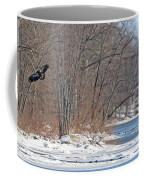 Bald Eagle Fledgling Near Ludwig Mill 2576 Coffee Mug