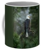Bald Eagle In Tree Coffee Mug