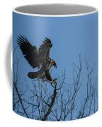 Bald Eagle Juvenile Landing In Tree Top Coffee Mug