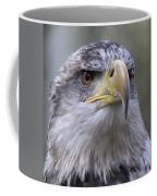 Bald Eagle - Juvenile Coffee Mug