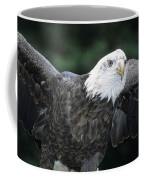 Bald Eagle Landing On Prey Coffee Mug