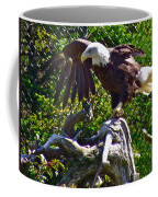 Bald Eagle With A Broken Wing In Salmonier Nature Park-nl Coffee Mug