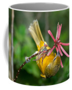 Baltimore Oriole Feeding On Coral Bean Coffee Mug