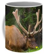 Banff Elk Coffee Mug