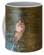 Bank Swallow Resting Coffee Mug