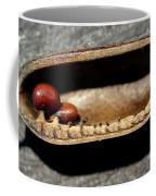 Baptisia Seeds Coffee Mug