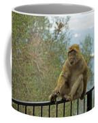 Barbary Macaque  Coffee Mug
