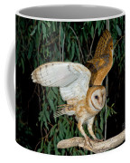 Barn Owl Alights Coffee Mug
