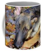 Baron In The Leaves Coffee Mug