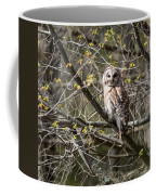 Barred Owl Square Coffee Mug