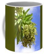 Beach Tree Seed Pods Coffee Mug