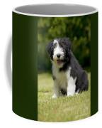 Bearded Collie Puppy Coffee Mug