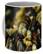 Beautiful Barnicles Coffee Mug