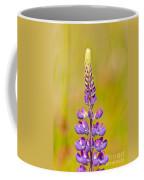 Beautiful Blooming Lupine Flower In Warm Sunlight Coffee Mug