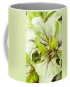 Beautiful Bordeaux Coffee Mug