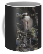 Beautiful Grey Jay Pose Coffee Mug