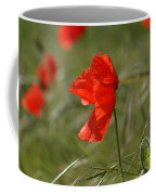 Beautiful Poppies 5 Coffee Mug