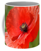 Beautiful Poppies 6 Coffee Mug