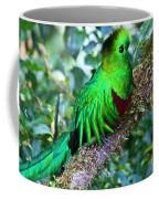 Beautiful Quetzal 2 Coffee Mug