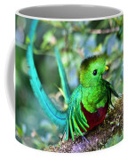Beautiful Quetzal 5 Coffee Mug