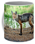 Beautiful Red Fox Coffee Mug
