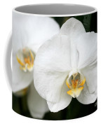 Beautiful White Phanaenopsis Orchids Coffee Mug