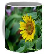 Beautiful Yellow Sunflower In Full Bloom Coffee Mug