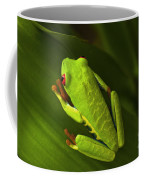Beauty Of Tree Frogs Costa Rica 6 Coffee Mug