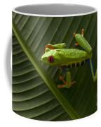 Beauty Of Tree Frogs Costa Rica 8 Coffee Mug